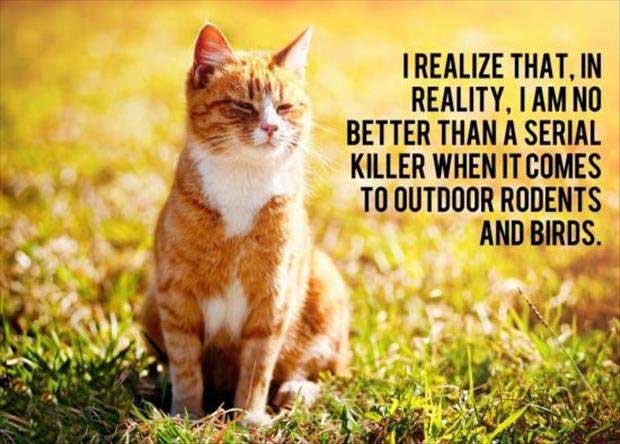cat-thoughts-funny