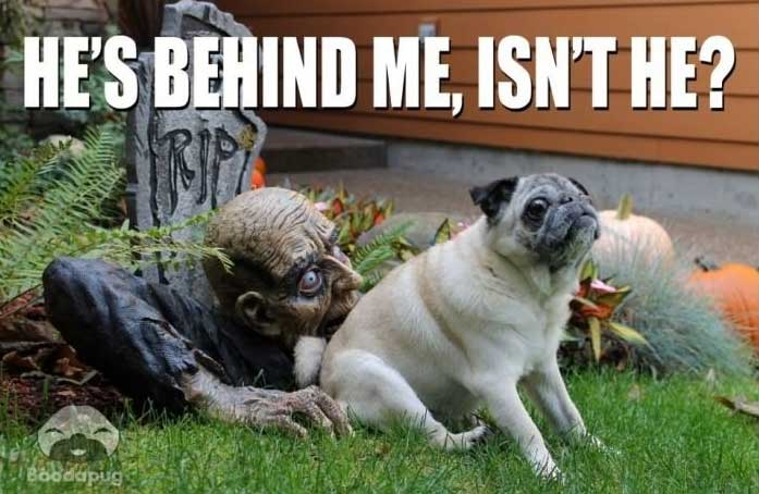 the 50 funniest halloween memes of all time gallery