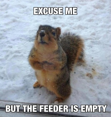 squirrl meme winter meme lol funny pictures blog lol 1263548365