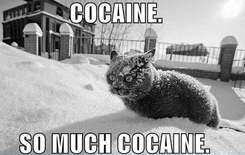 Hilarious Blizzard Memes Take Over the Web as Winter Storm ... |Reddit Snow Meme