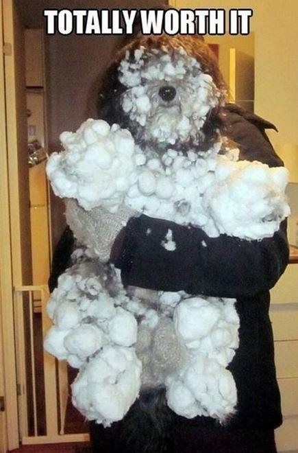 snow dog memes