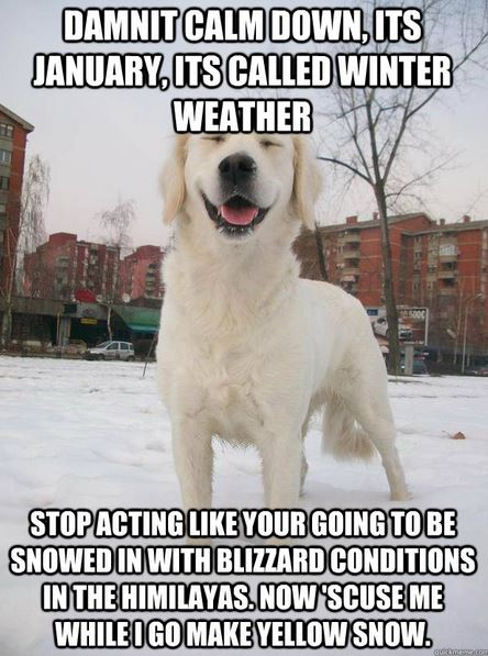 snow dog meme