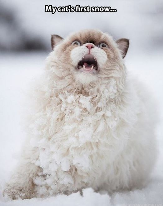 cats first snow