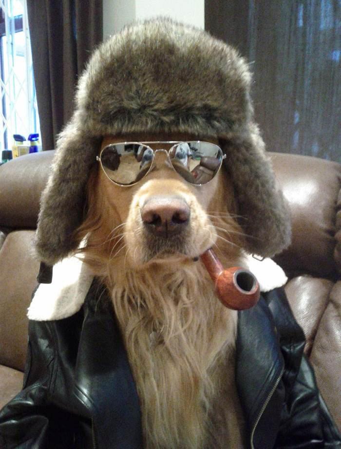 coolest-dog-ever