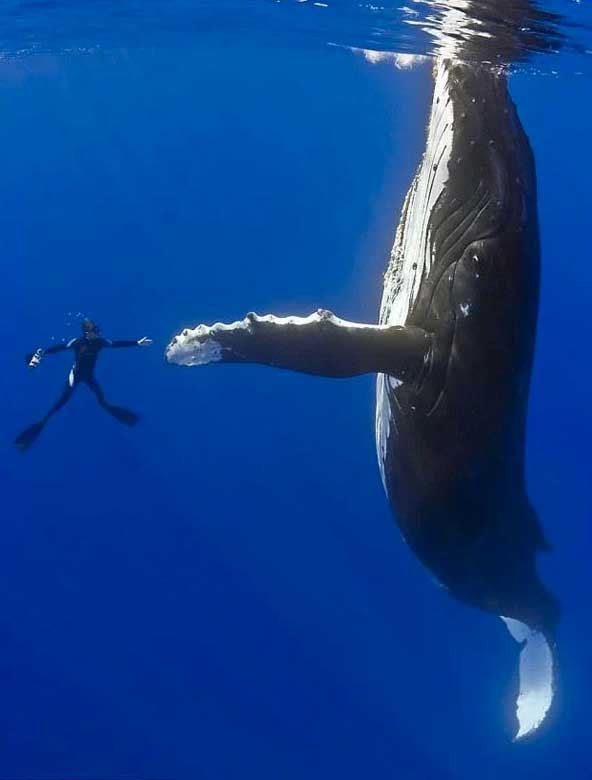 whale-high-five