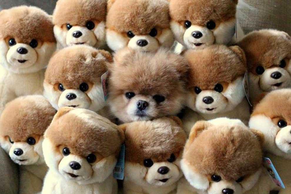 worlds-cutest-dog