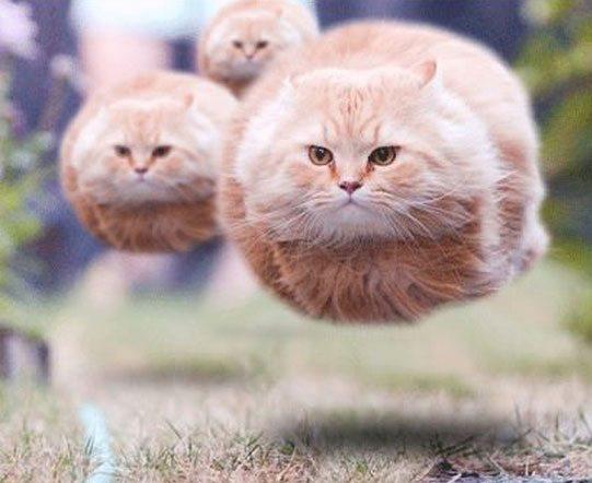 best-cat-photos-ever