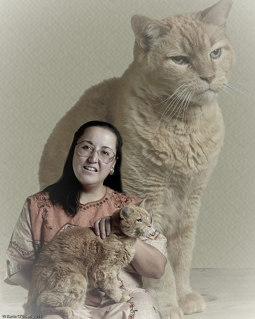 Incredibly Awkward Cat Glamour Shots (GALLERY ...