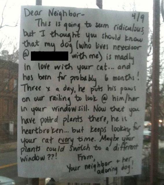 neighbor-note-cat