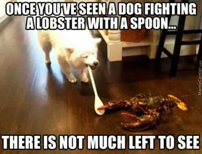 lobster with dog meme