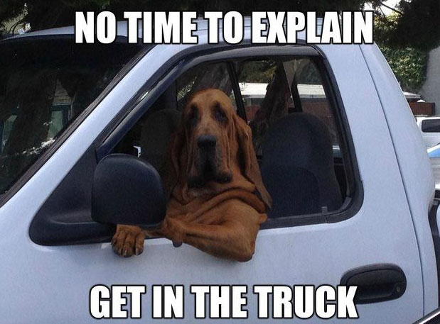 dog drivers side dog meme