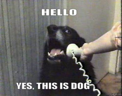this is dog on phone dog meme