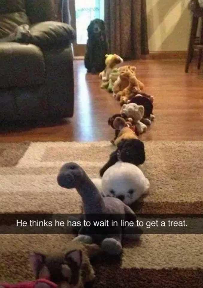 dog waiting for treat dog meme