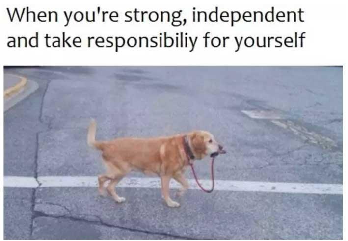 dog carrying leash dog meme