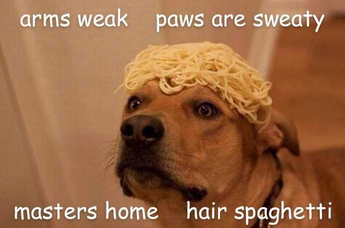 hair spaghetti dog meme