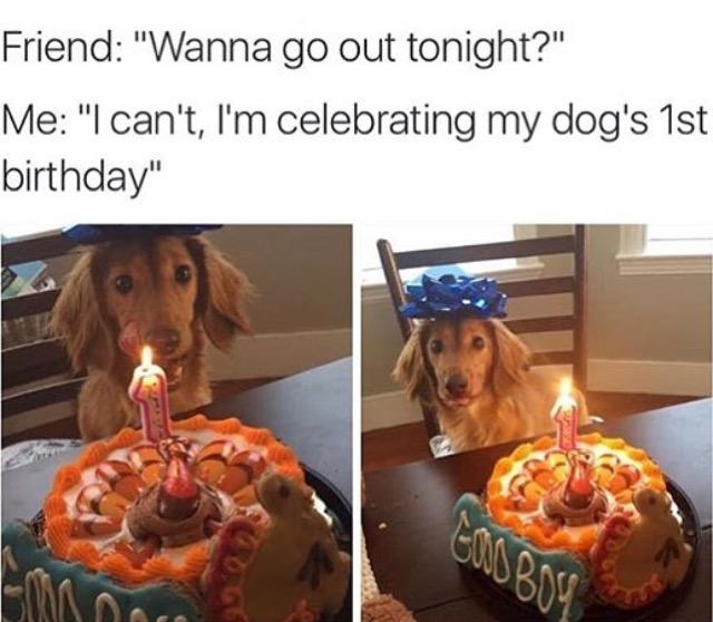 dog birthday dog meme