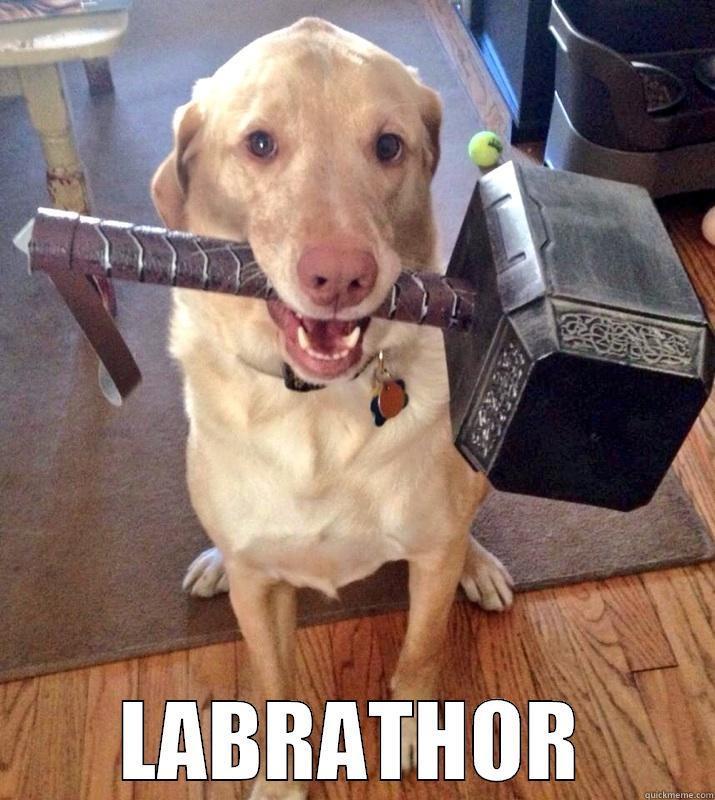 labrathor dog meme
