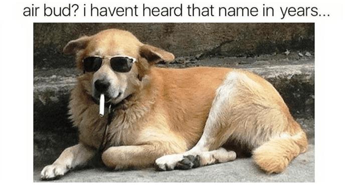 air bud dog meme