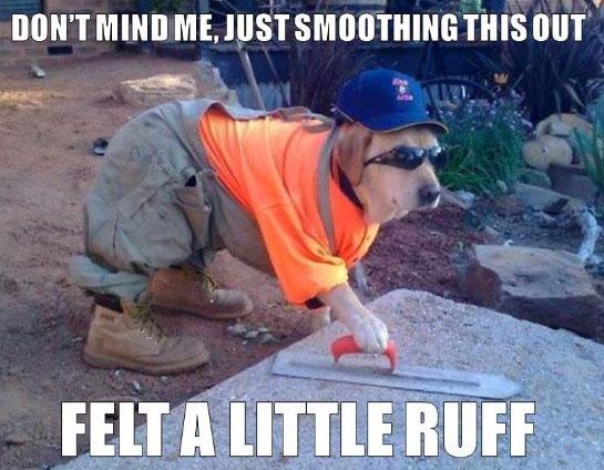 working dog meme