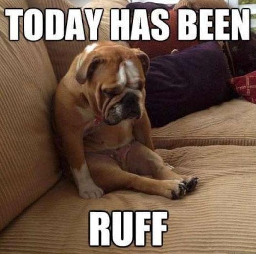 funny sitting dog meme