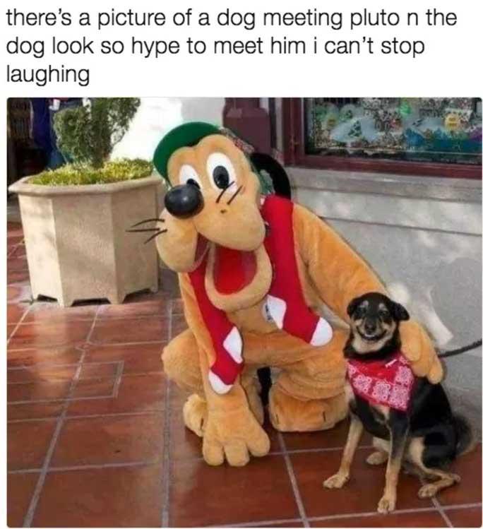 pluto dog meme
