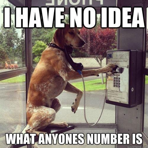 phone dog meme