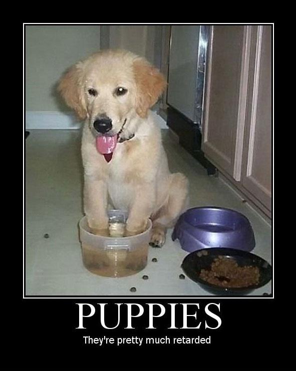 puppy water bowl dog meme