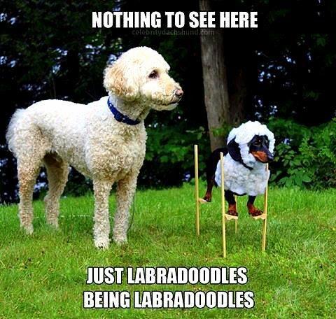 dog on stilts dog meme