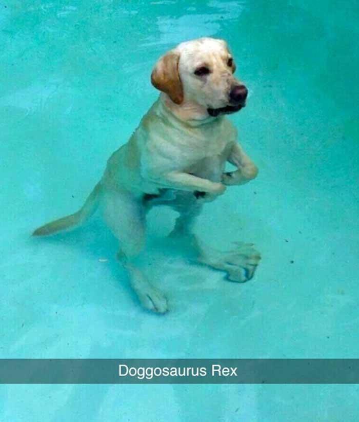 doggosaurus rex dog meme