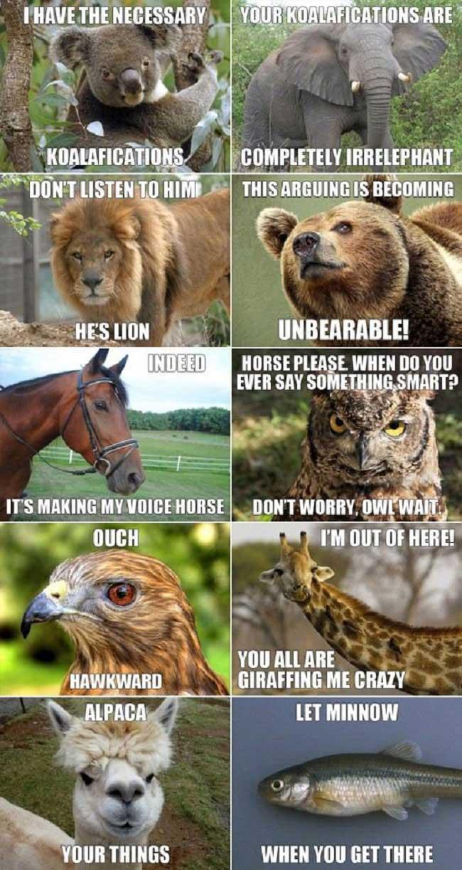 animal-puns