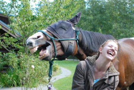 funniest-horse-photo-ever