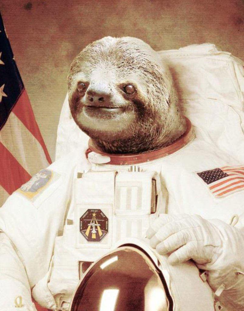 sloth-astronaut