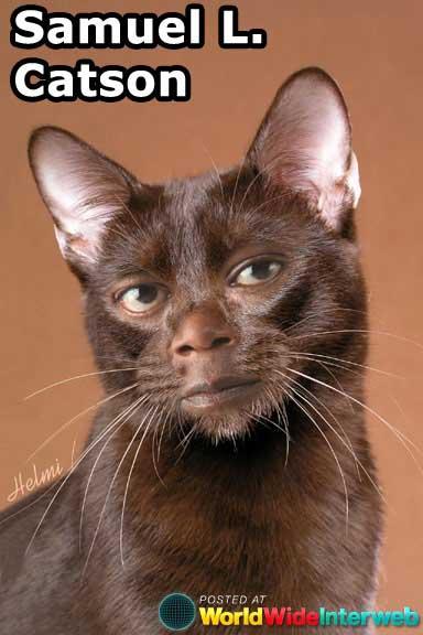 celebrities-as-cats