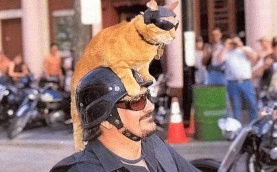 bad-to-the-bone-cat