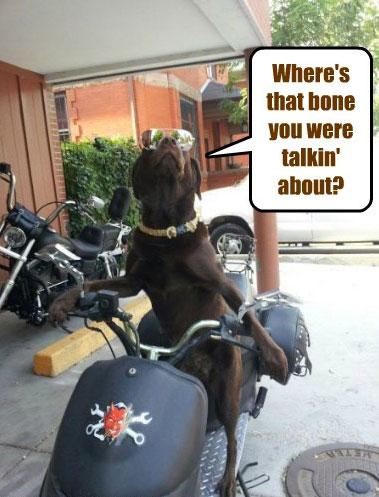 bad-to-the-bone-dog