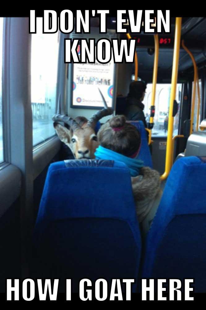 best-goat-memes