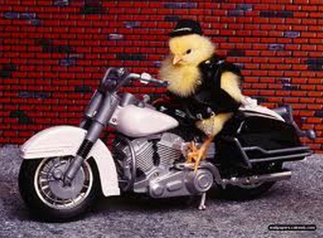 biker-bird