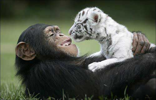 cutest-animal-photos-ever