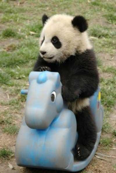 cutest-animals-ever