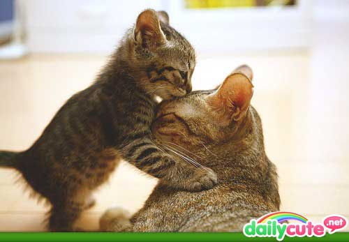 cutest-cat-photos-ever