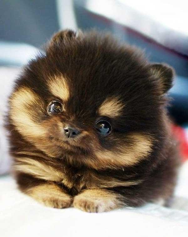 cutest-dog-photos-ever