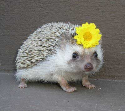 cutest-photos-ever-2