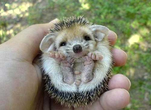 cutest-thing-ever-pics