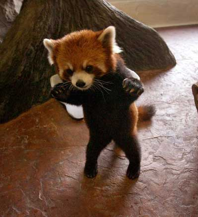 cutest-things-on-the-internet