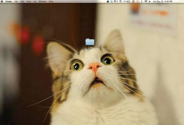 Funny Desktop Wallpaper