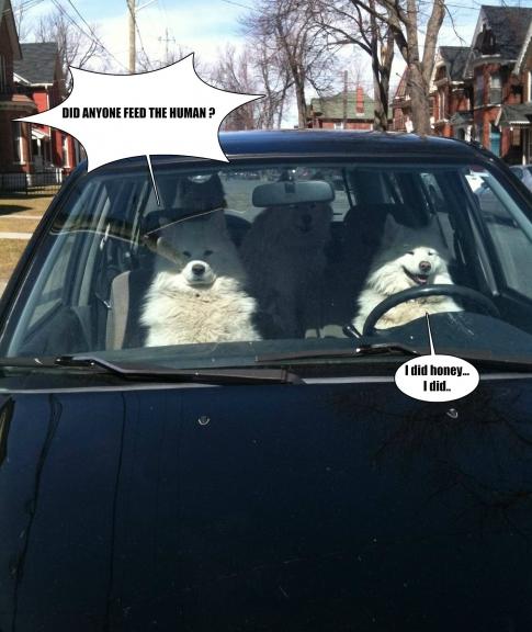 dog parallel universe