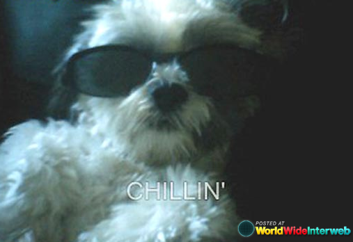 dogs chillin gallery