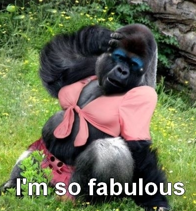 fabulous animal pictures