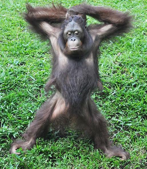 fabulous monkey