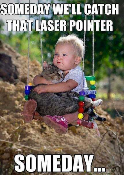 the 20 funniest pictures of babies with cats worldwideinterweb